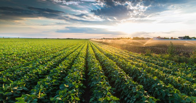 Perstorp enters fertilizer market with chloride free potassium product