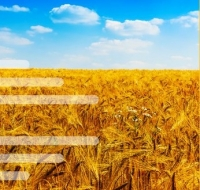 SUEZ launches blockchain-based recycling solution for agricultural waste