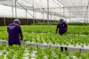 BASF invests in Indian hydroponics farming startup