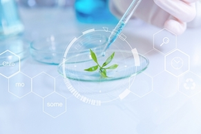 DIC, Debut Biotechnology partner to develop natural pigments